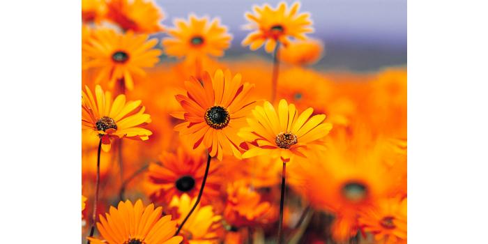 bomboniere fiori barbara